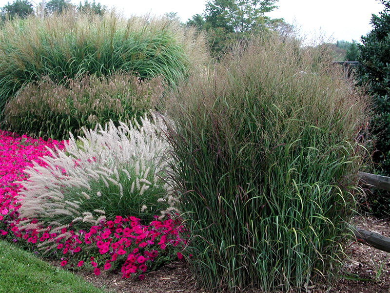 Deseret nursery perennial farm controling weeds for Ornamental grass landscape ideas